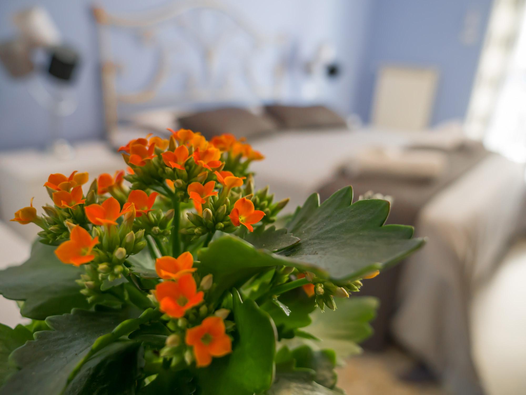 Un tocco floreale - Le Camere - B&B Roma Centro